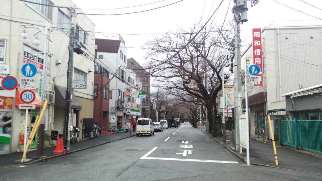 上北沢駅前 桜並木