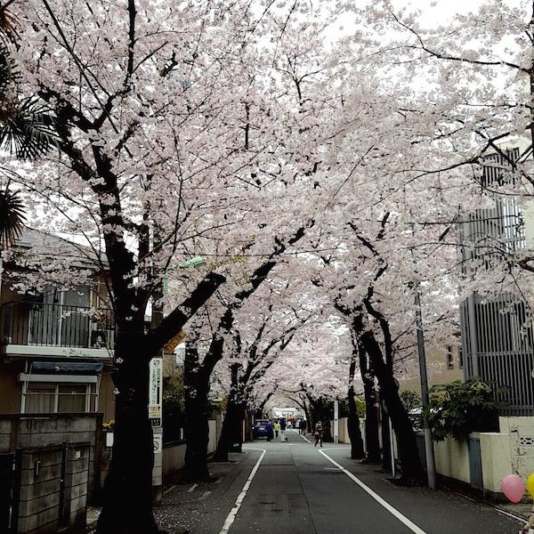 上北沢桜まつり(桜並木)
